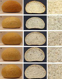 enzimas pan